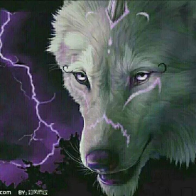 黑白雪狼手绘图